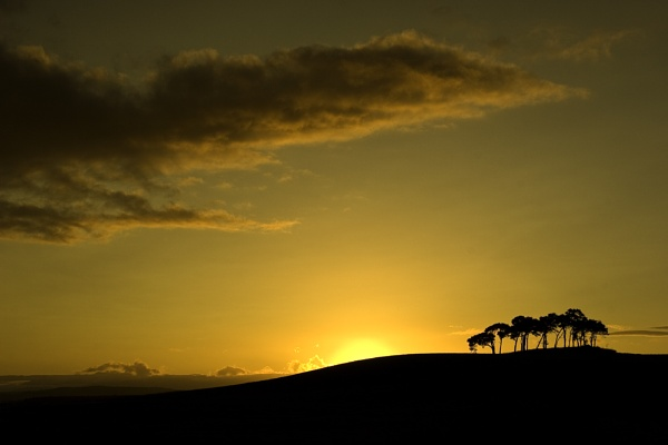 Trees at sunset by Colin_Leslie