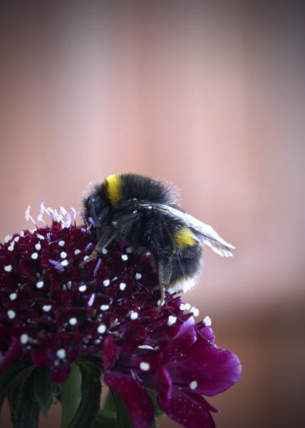 Scabby Bee by GPTek