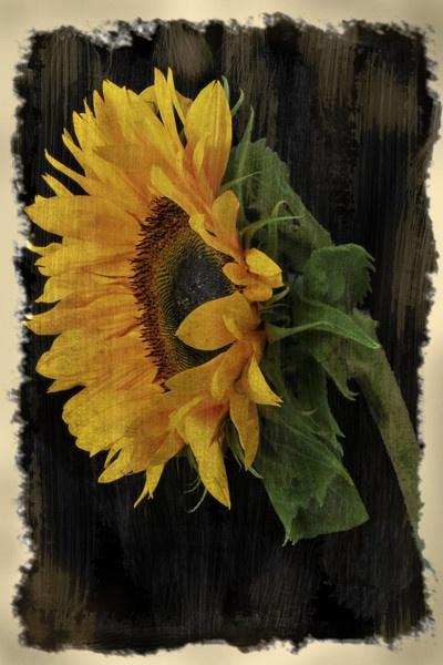 sunflower art by NikkiW