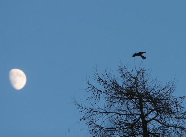Moonlight Landing by BillN