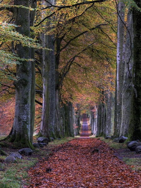 Entrance to Drummond castle in Perthshire by jmcca