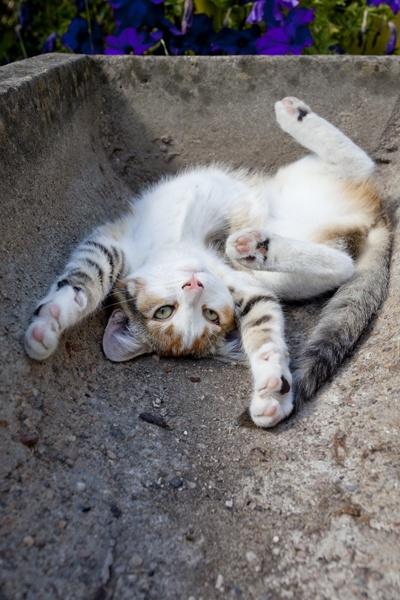 Brebis, le petit chat by brianquinn