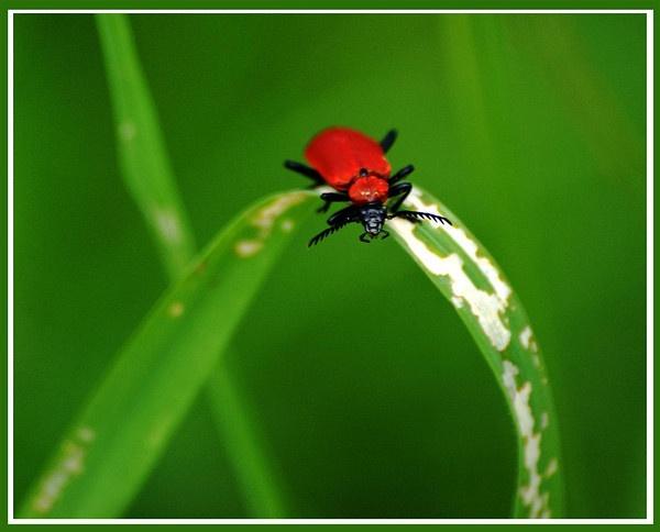 Bug 2 by dnwilliams