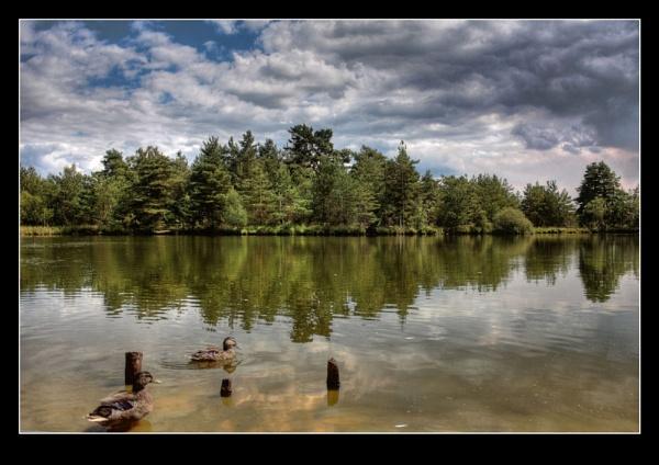 a lake near Tilford by Bigfish3311