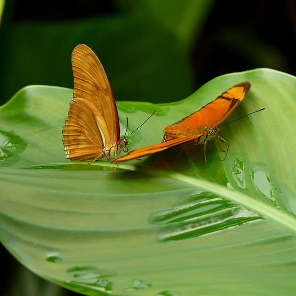 Julia Butterflies by gonedigital62
