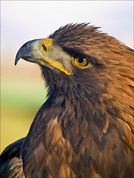 Eagle by JdeNLucas