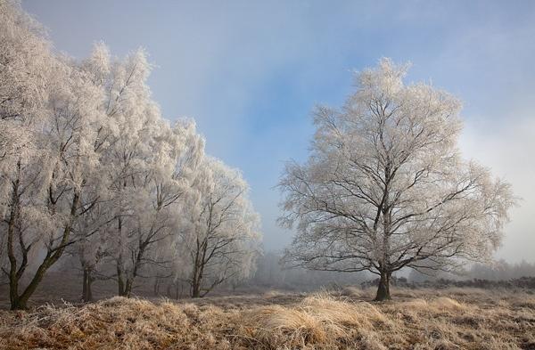 Hoar Frost by Guy_Rogers