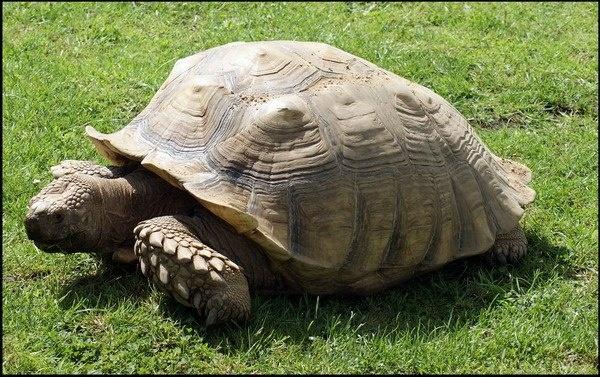 Tortoise by Xander_H
