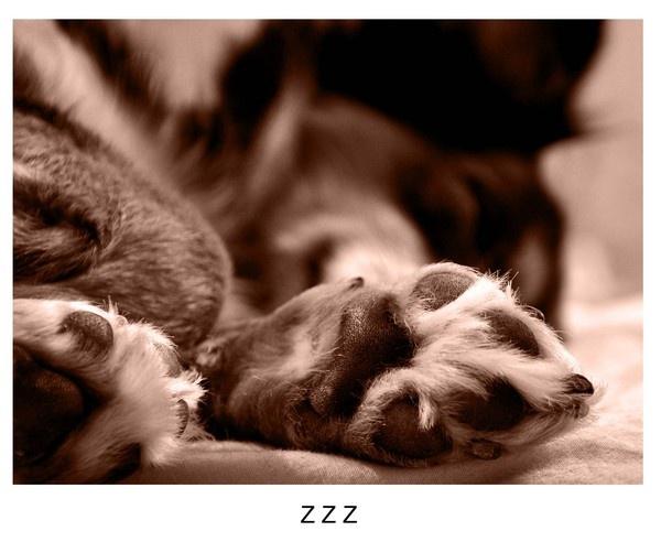 zzz by Ananda