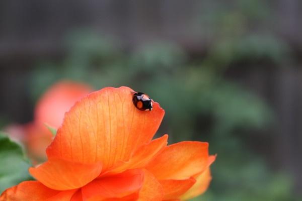 Upon a petal. by ClareDavid