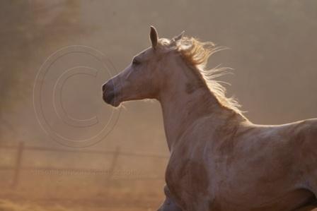 White Horse by Msalicat