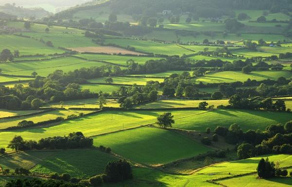 Green Fields by JillyW