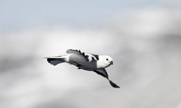 Flying by aqqa