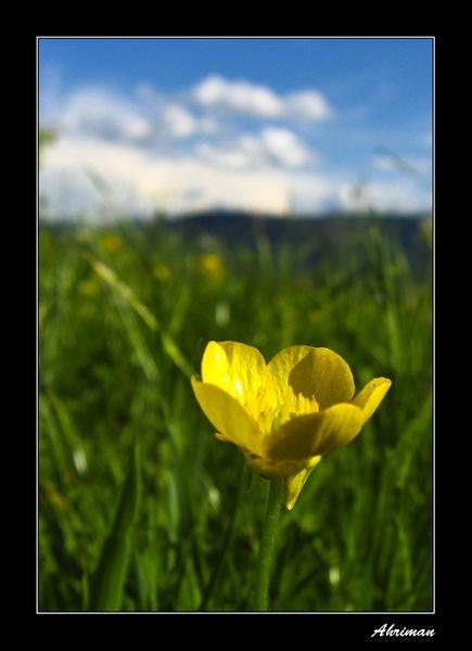 Spring Wonder by Ahriman