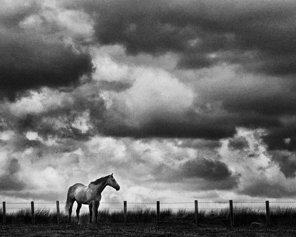 Horse by havapeek