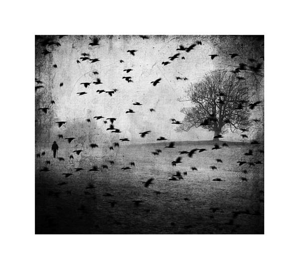 Rain Tree Crow by wyatturp