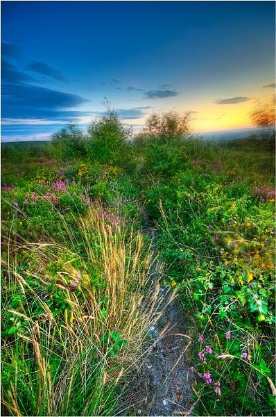 Sunset on the Heath by RockArea