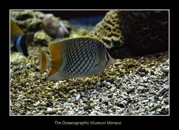 The Oceanographic Museum by dancingqueen
