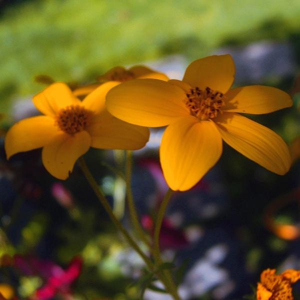 Flower Twins. by Bat_Babes