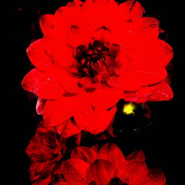 Flower Burn.. by Bat_Babes