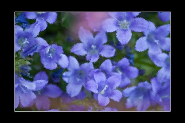 purple flowers by StephenDM