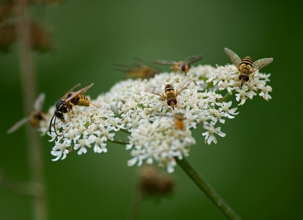 Wasp banquet by dnwilliams