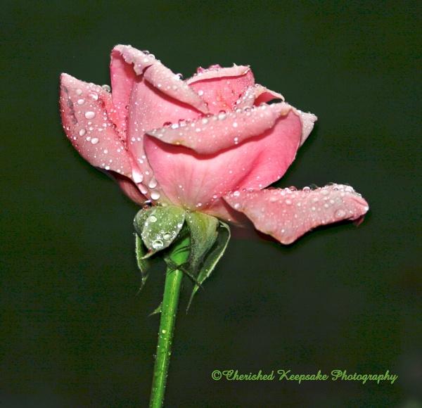 rain drops by dawnmichelle