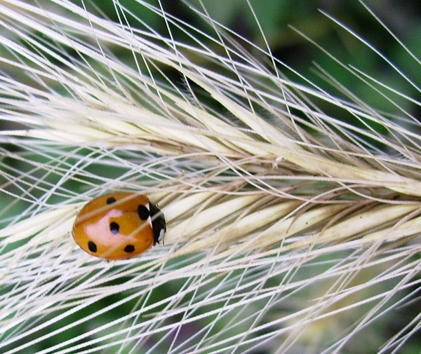 Ladybird by brightspark