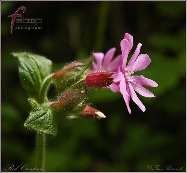 Wild flowers 1 by franfoto
