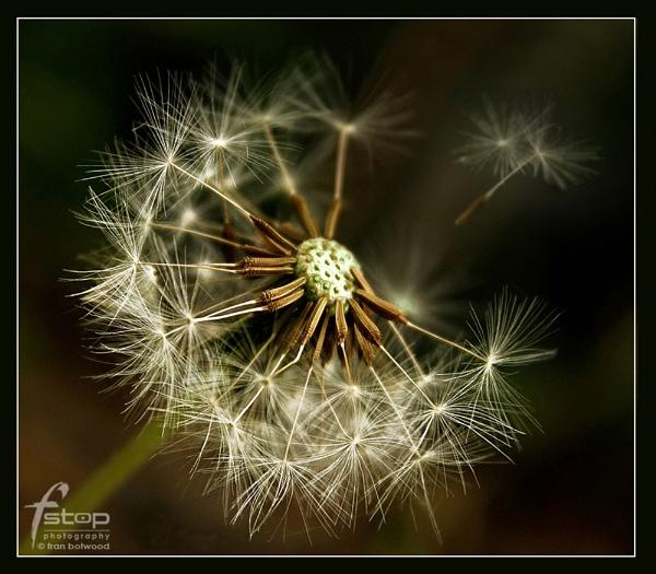 Wild flowers 2 by franfoto