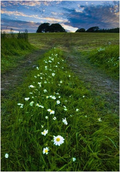 Daisy Way by Natzdad