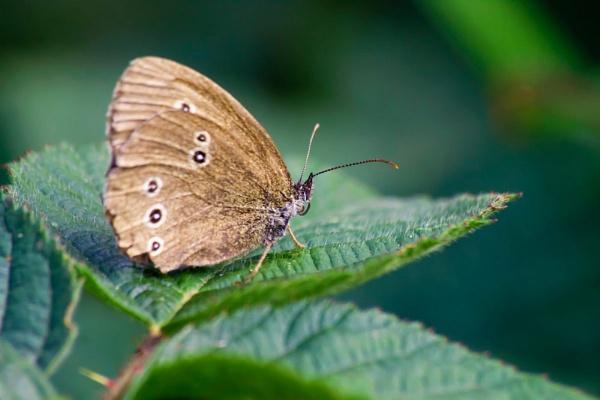 butterfly2 by HuntedDragon