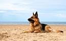 Lifes a beach by phila67