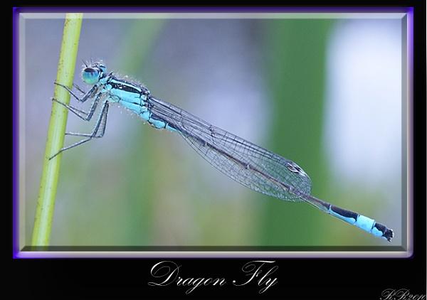 Dragon Fly by RickyRossiter