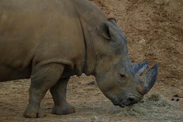 Rhino by nik50