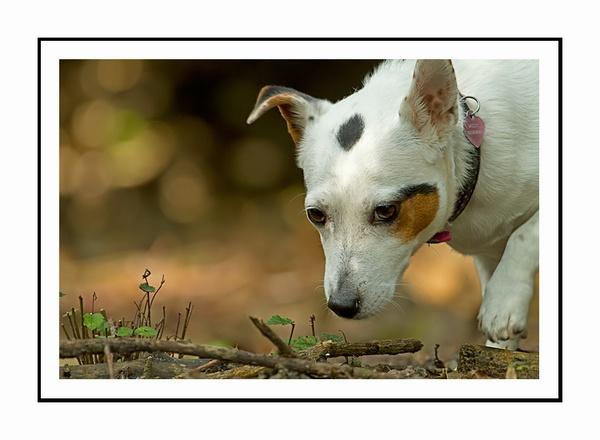 Mossy\'s best friend by Clint123
