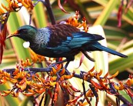 Tui - Lady Norwood Rose Garden, Wellington NZ