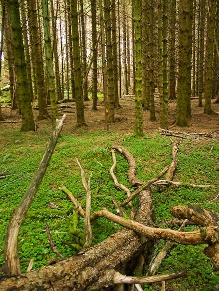 Tangled wood by landscapepics