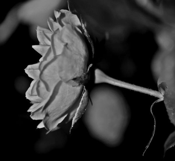 flower by toniiixx