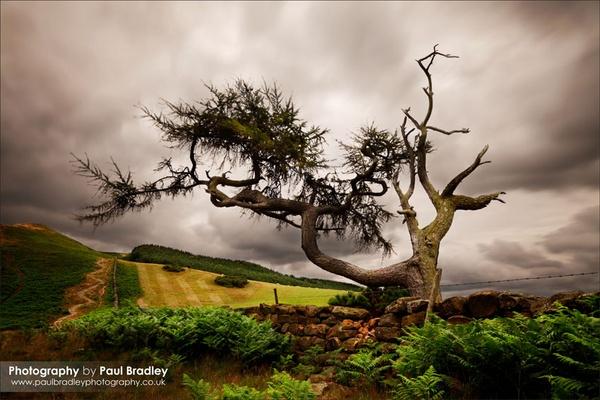 Tree by ScudMonkey