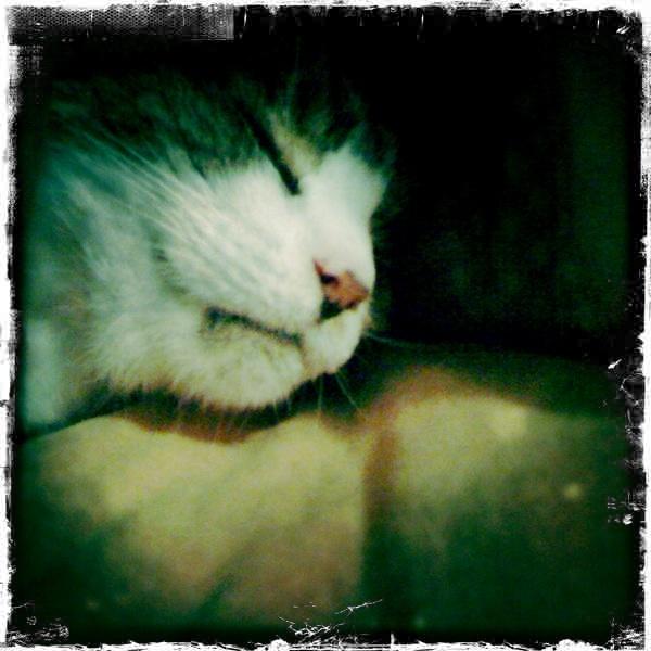 Sleepy Theta by pattycake