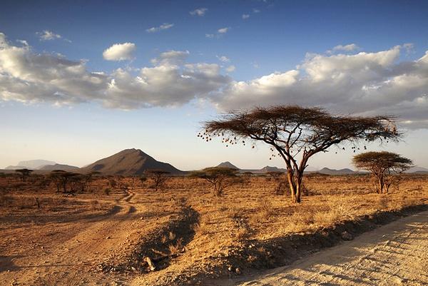 Samburu Game Reserve, Kenya, East Africa by jimshannon