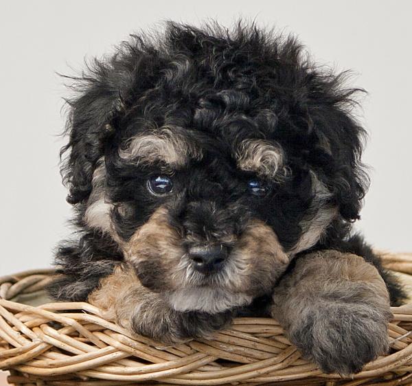 Cutie by BarbaraB