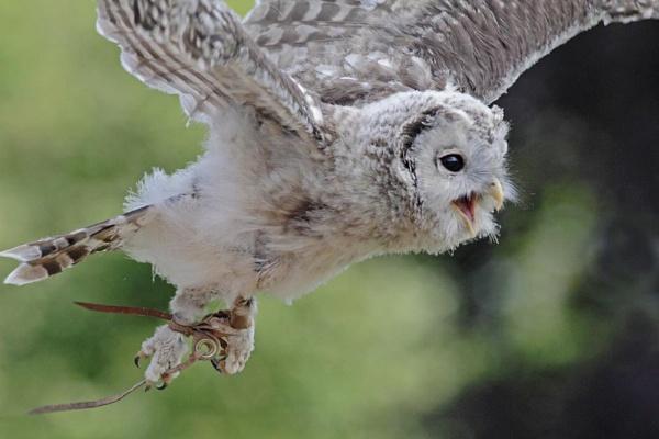 In flight by Hazelmouse