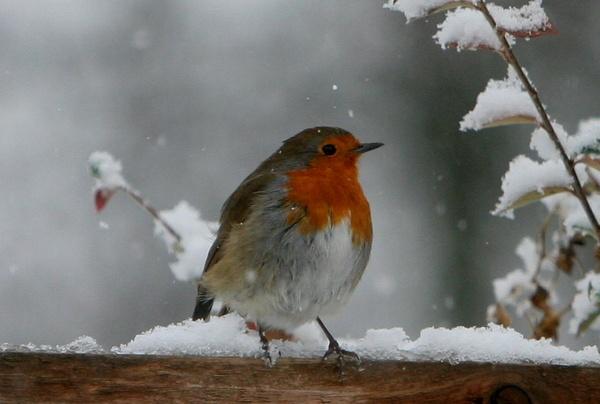 Bloody Winter by BillN