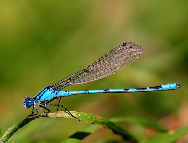 Damsel fly by walk8