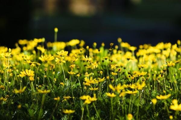 Yellow by jrpics