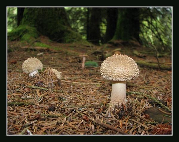 Woodland Fungi by ANDYH62
