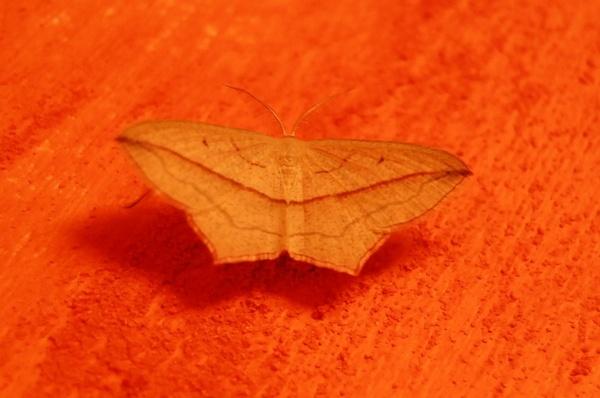 Pretty in orange by MagdalenaS