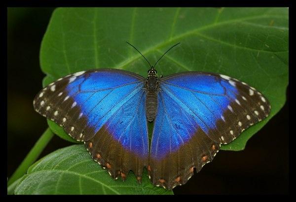 Blue by Beanie76
